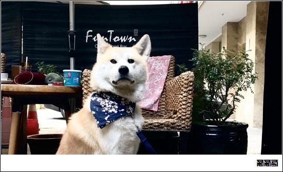 20161202_dog04